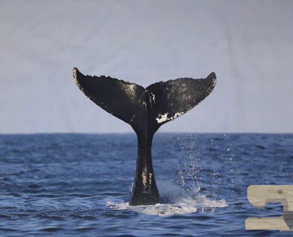 Paneel Stenzo walvis